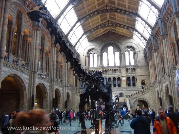 dinozaur1-1
