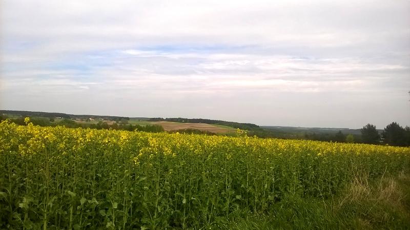 Camino Polaco