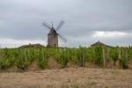 Moulin-à-Vent – Rzymianie, wiatrak i przyjaciel pies
