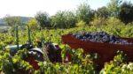 Dziennik pokładowy. Radości winobrania (17-18)